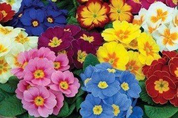 Soğuktan Etkilenmeyen Çiçekler